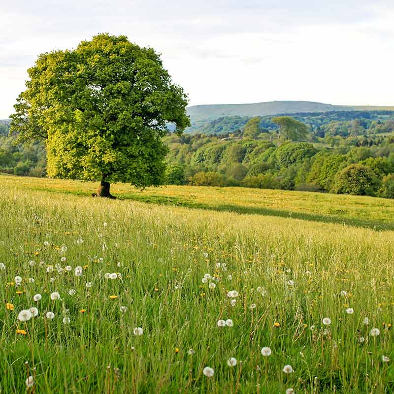 walk from greenacres staffordshire